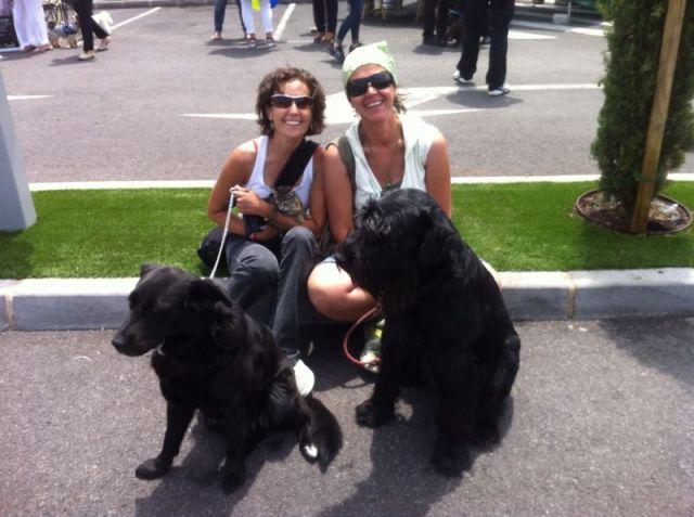 Las perras Elio y yo